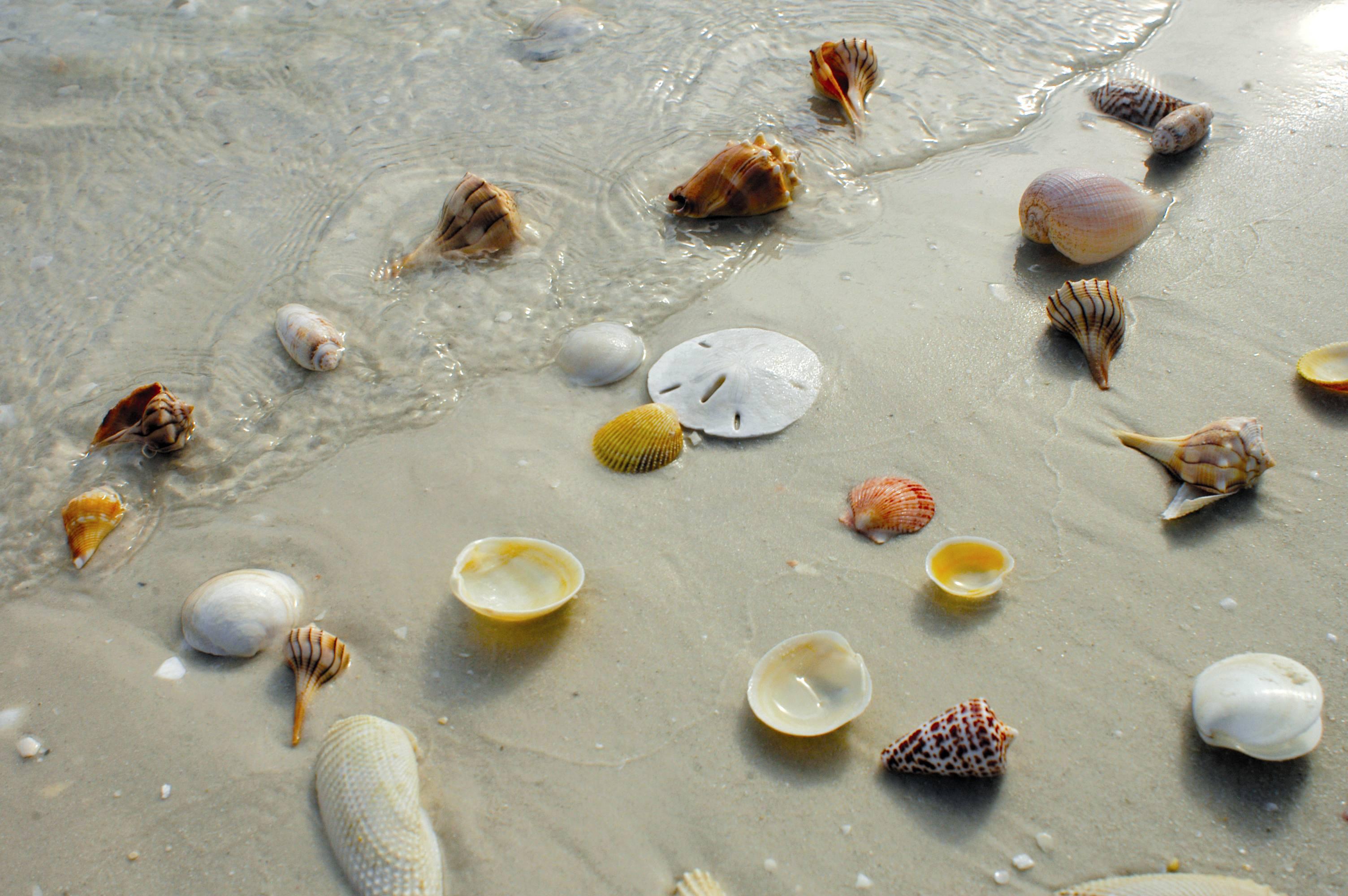 Marco Island Florida Winter Rentals