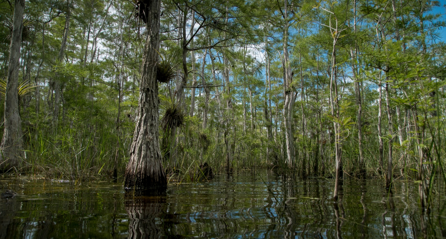 The view from a boat in the Everglades.