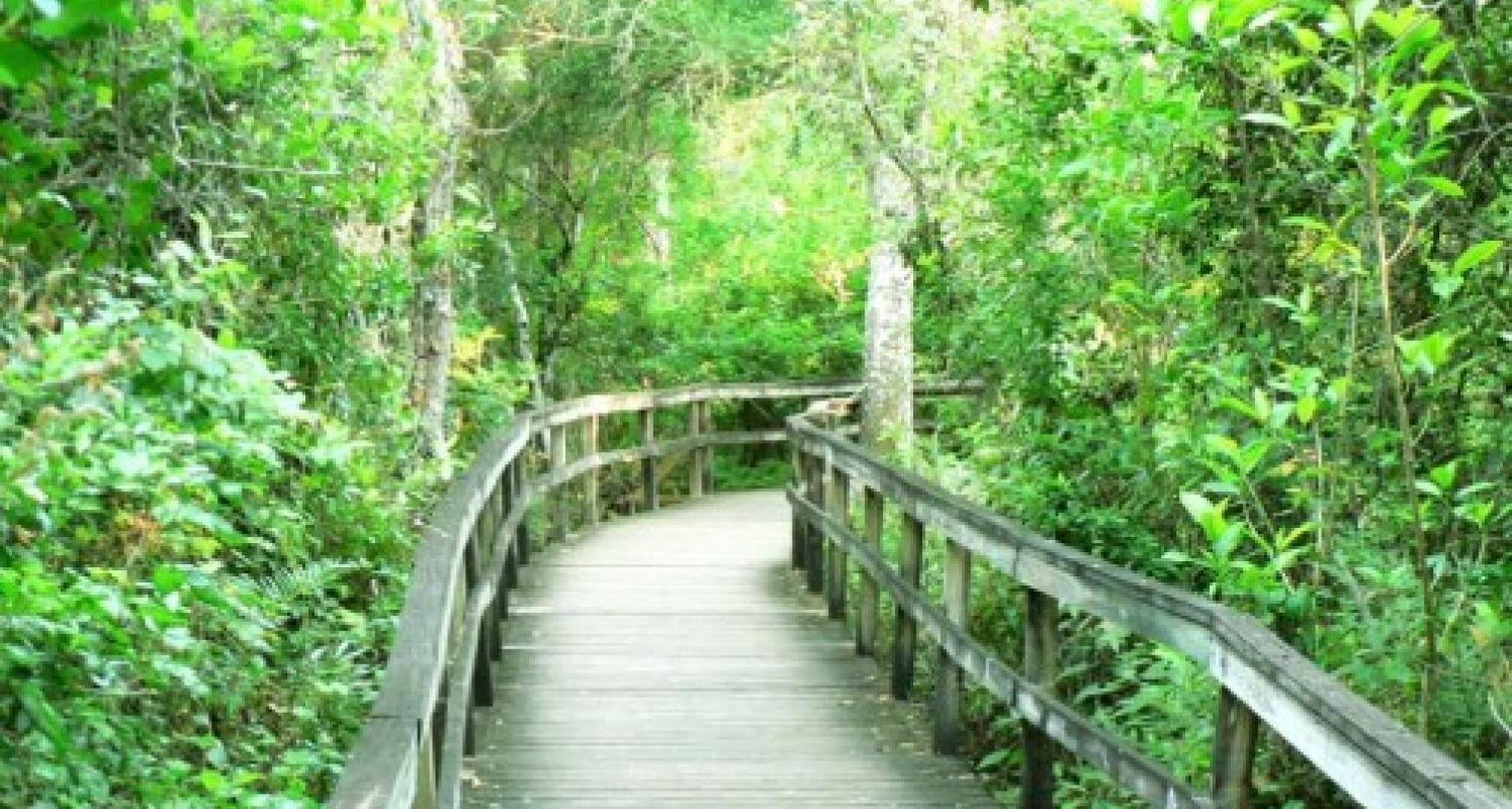 Boardwalk in the Everglades