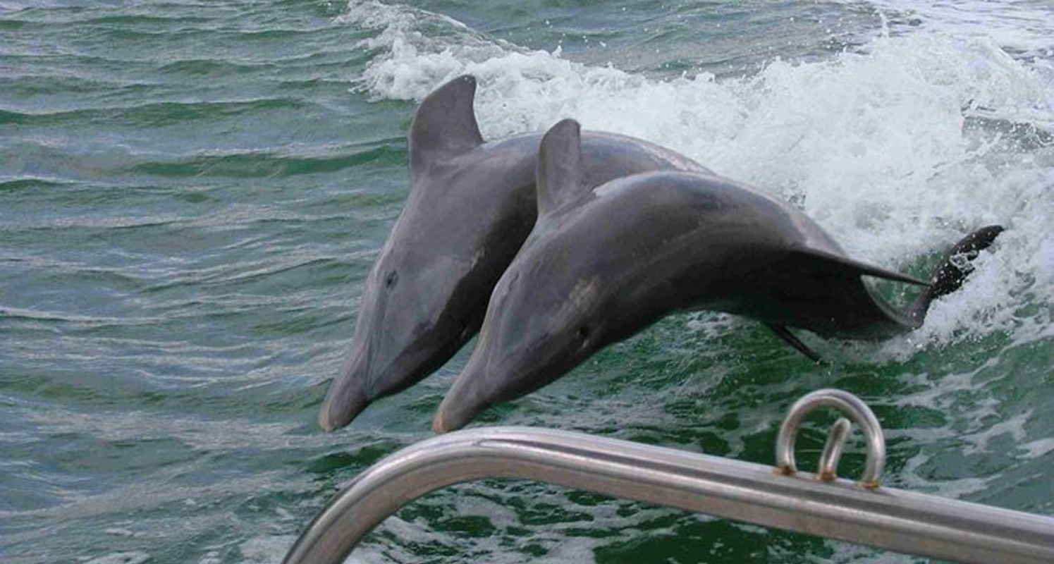 Dolphins Dancing