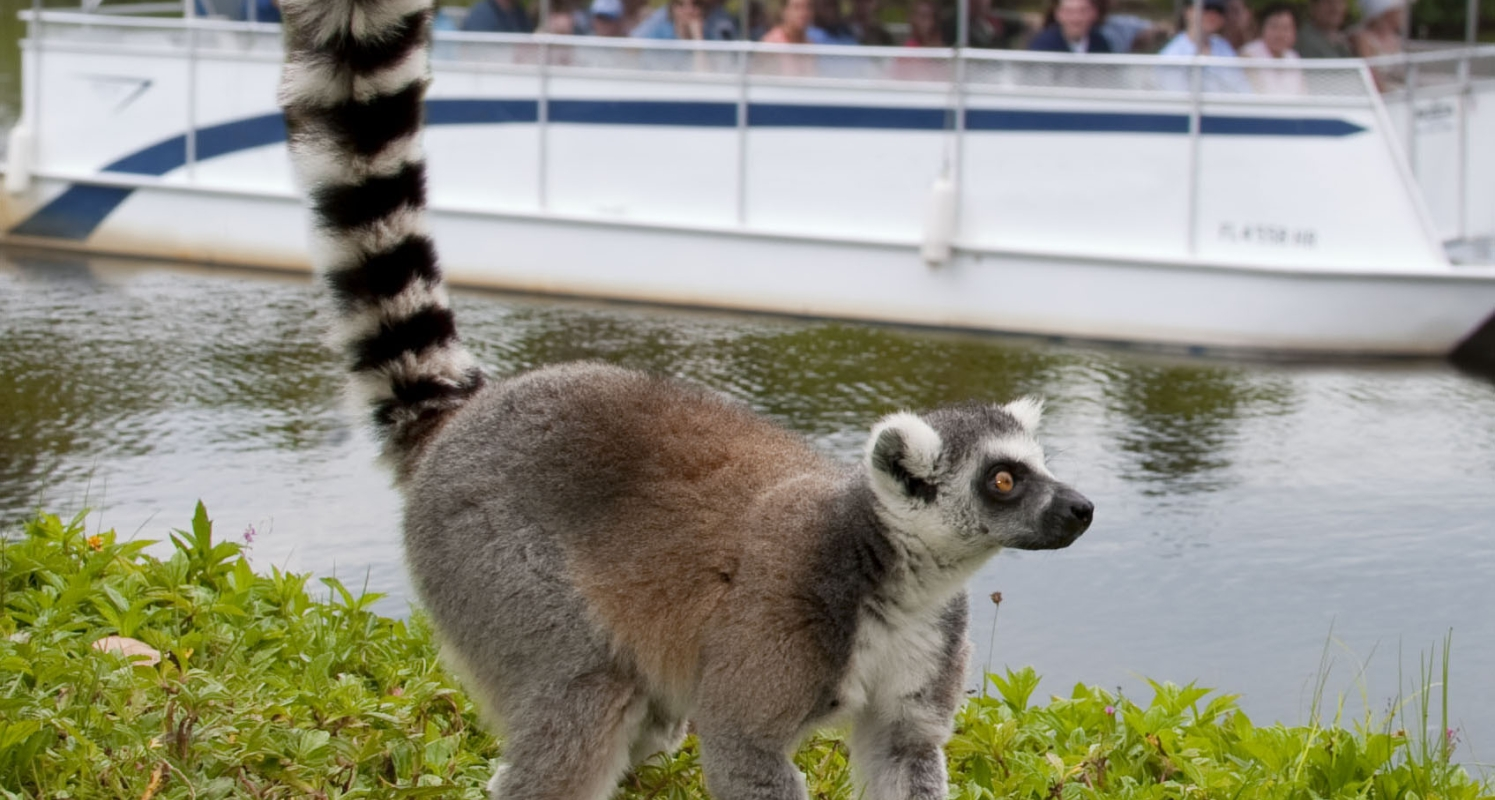 Guests aboard the Primate Expedition Cruise observe a lemur on an island.