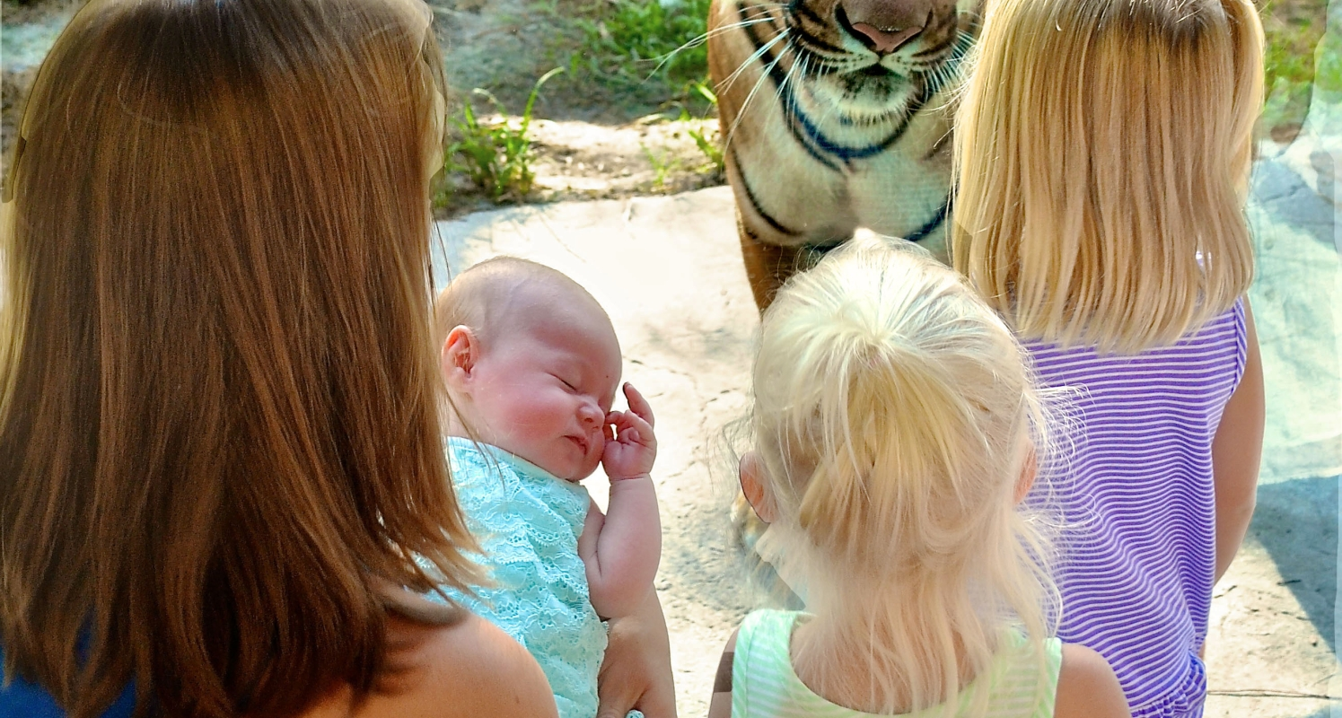 Young Naples Zoo visitors enjoy an up close encounter with a Malayan tiger.