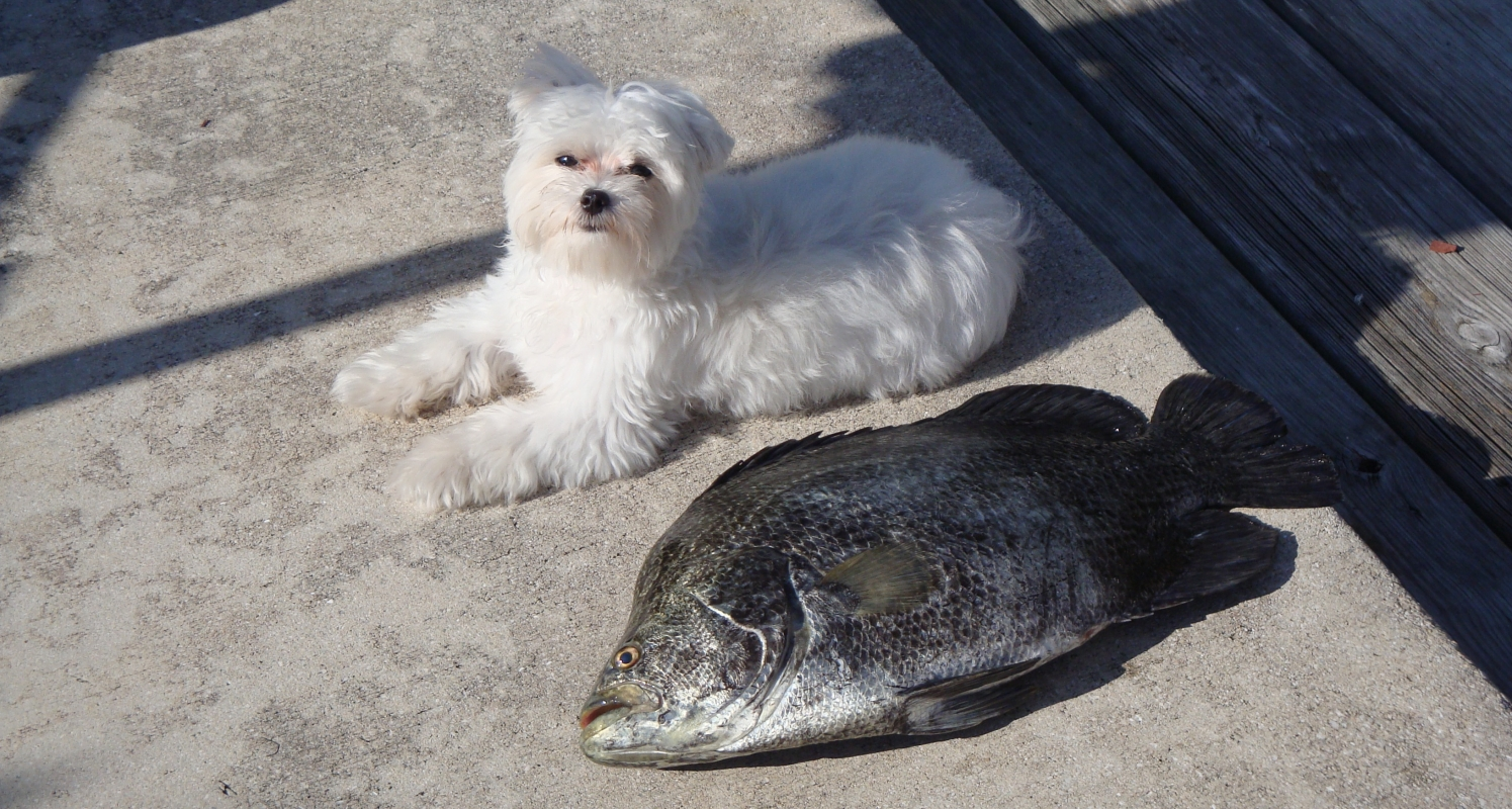 Tripletail and Friend