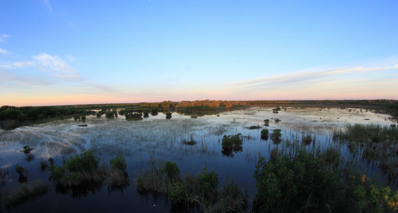Everglades city past present naples marco island for Everglades city fishing