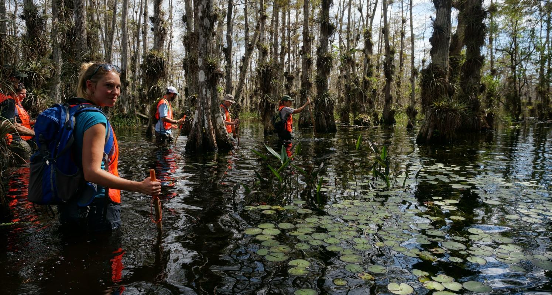 Ranger-led Wet Walks into the cypress swamp
