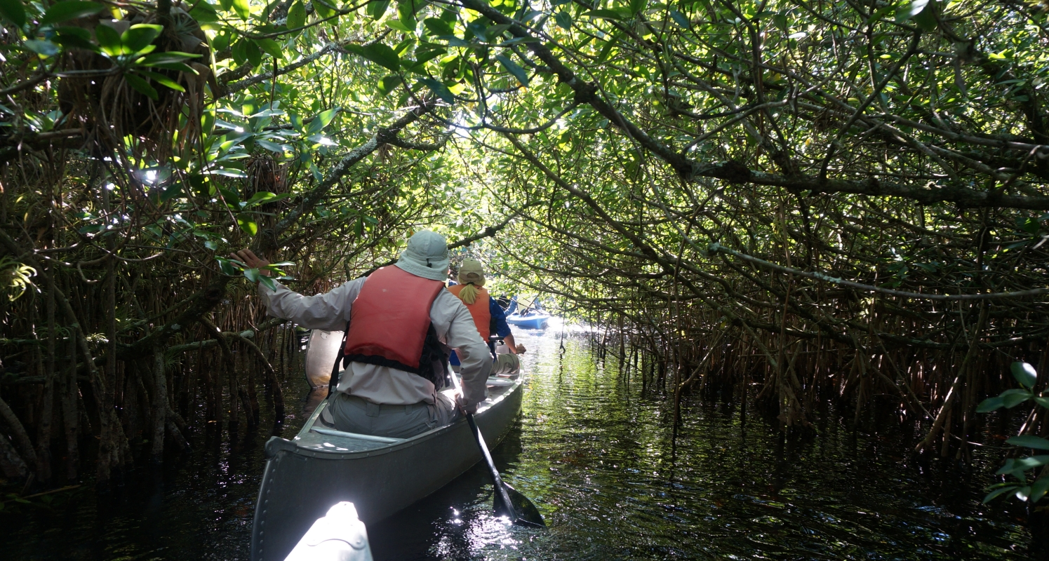 Canoe through mangrove tunnels of the Turner River with a ranger
