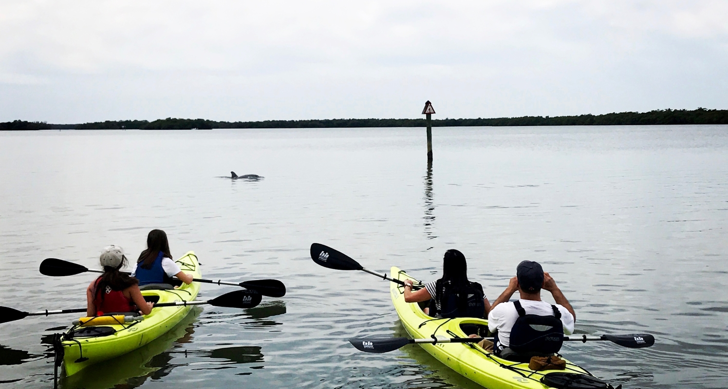 Dolphins on our kayak tour