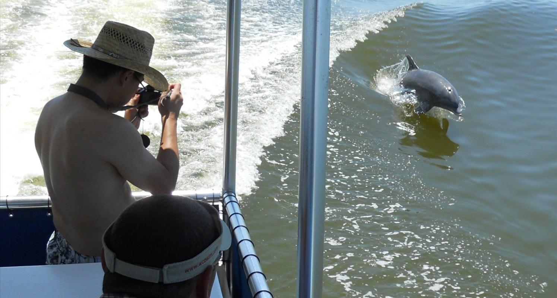 Calusa Spirit Shelling Amp Dolphin Watch Cruise Naples