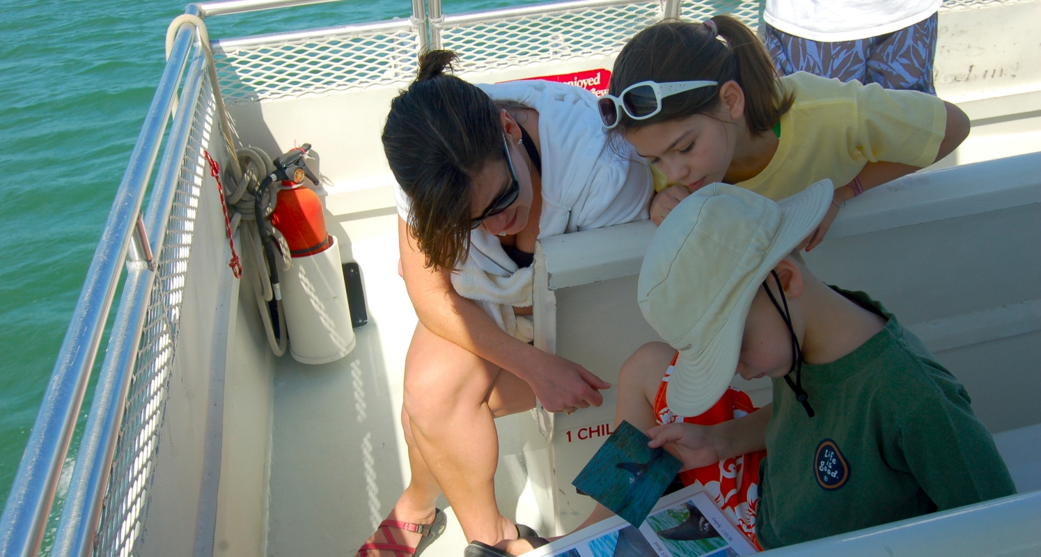 Passengers help identify dolphin as they are spotted by reviewing photos of known dolphins' dorsal fins.