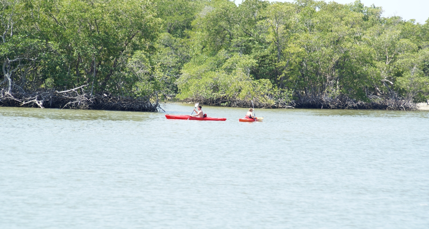 Enjoy the pristine beauty and sounds of the Estuaries
