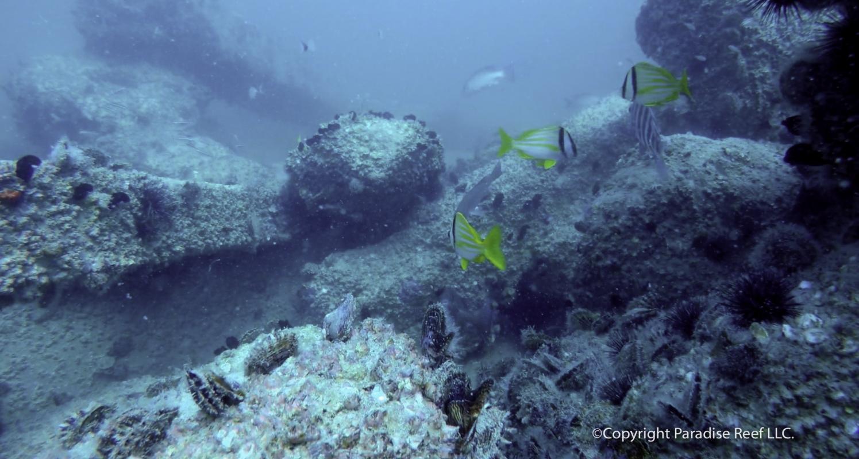 Jackson Fish Camp Reef
