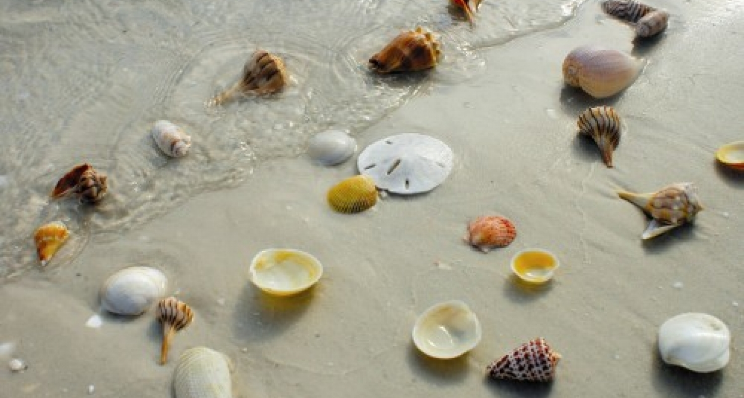 Shells on the beach in Paradise