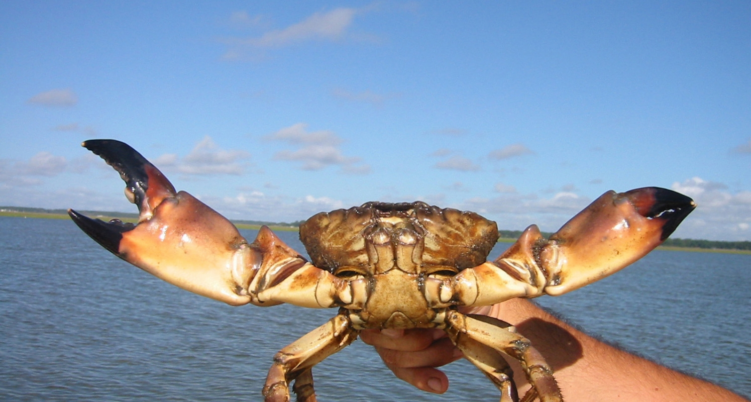 For serious seafood lovers in Florida's Paradise Coast, fall means one thing: Stone crab claws!