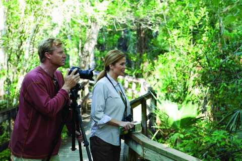 Look for birds, wildlife or the elusive ghost orchid in Naples, Marco Island and the Everglades.