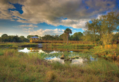 The eight-acre Christopher B. Smith Preserve at Conservancy of Southwest Florida is an upland and scrub habitat.