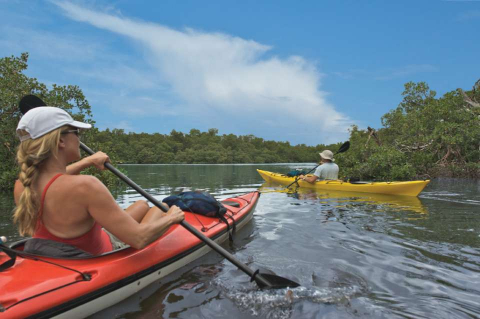 Kayakers paddle through mangrove forests in Naples and the Everglades