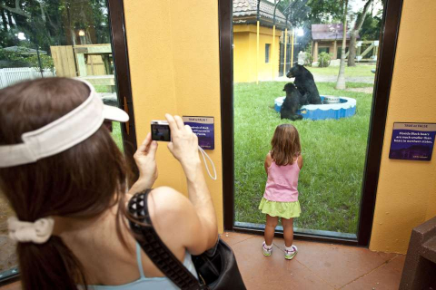A little girl watches black bears at Naples Zoo at Caribbean Gardens.