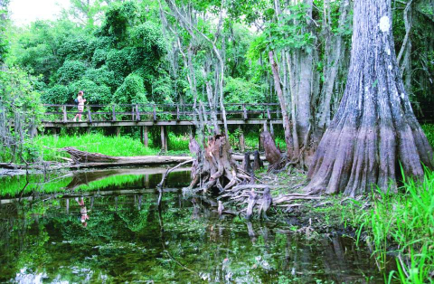 A boardwalk winds through a swamp in the Florida Everglades.