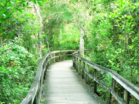 A boardwalk in one of the natural habitats found in Florida's Paradise Coast.