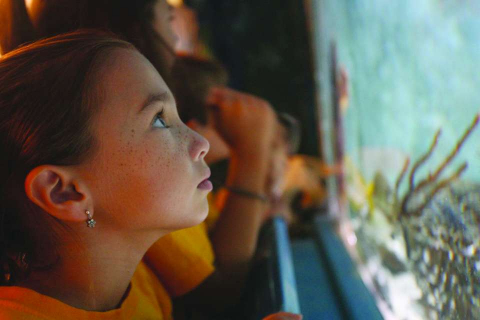 A child views a turtle tank in the Paradise Coast of Florida.