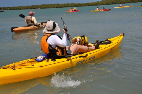 Explore the Ten Thousand Islands on a kayak, canoe, or small powerboat.