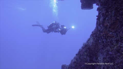 A diver explores hidden nooks and crannies of the Paradise Coast Reef.