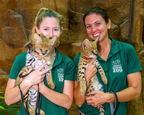 Serval Cats at the Naples Zoo