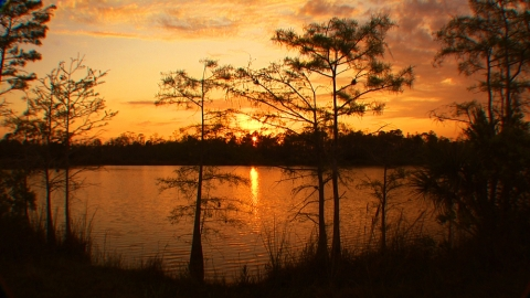 Sunset in Big Cypress National Preserve by Elam S. Stoltzfus