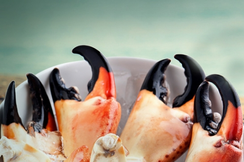 Fall for Fun at the Annual Stone Crab Festival