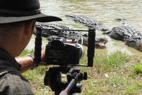 Gators being filmed in the Everglades