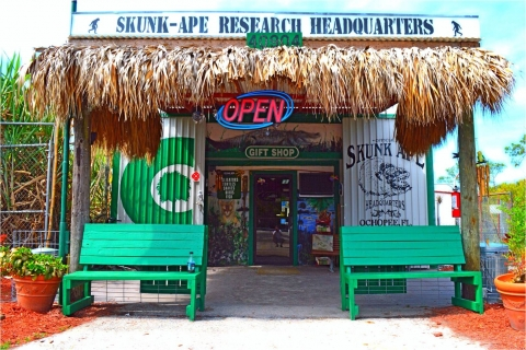 Learn about the legend of the Everglades Skunk Ape at Skunk Ape Headquarters in Ochopee, Florida