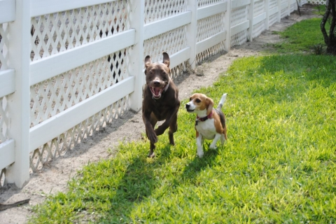 pet boarding services naples marco island everglades