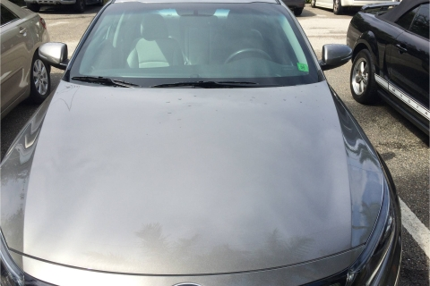 Punta Gorda Avis Car Rental