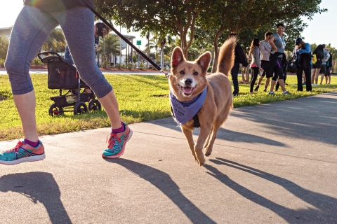 Run For the Paws