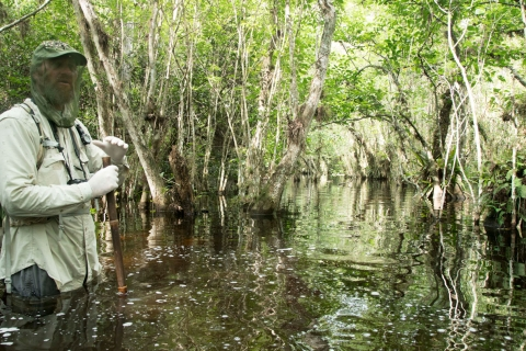 Swamp-walk hero in the Florida Everglades