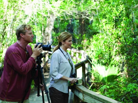 Must-See Bird Watching in the Naples Area