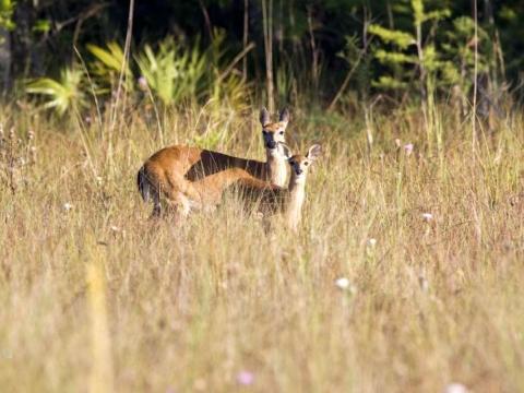 Bird Watching & Wildlife Spotting