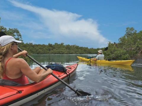 Guided Eco-Tours by Kayak, Boat, Bike or Airplane