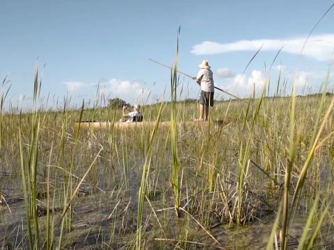 Gliding Through the Everglades