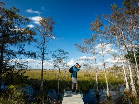 Big Cypress National Preserve: Top Ways to Explore