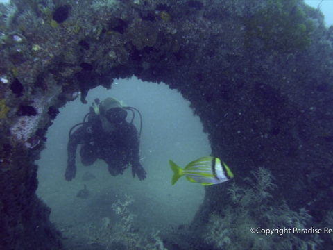 Discover Beauty Reborn on Florida's Paradise Coast Reef