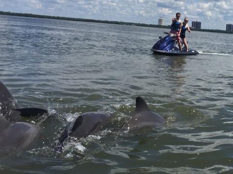Das 1x1 der Delfine