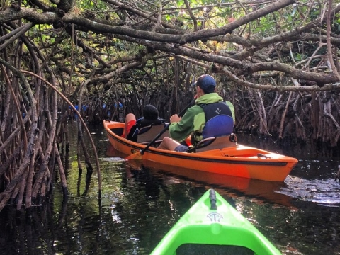 Guided mangrove tunnel kayak trip