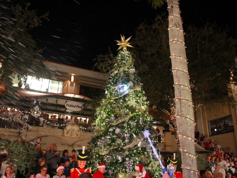 Christmas-Tree-lighting. jpg