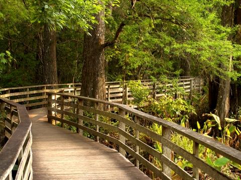 Ancient Forest Walking Tour