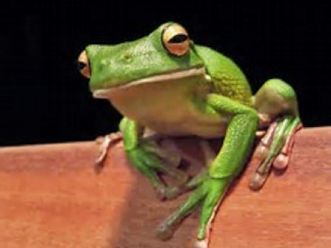 Science Saturday at Rookery Bay - Fantastic Frogs