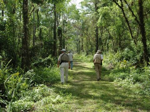 Bird Rookery Swamp trails