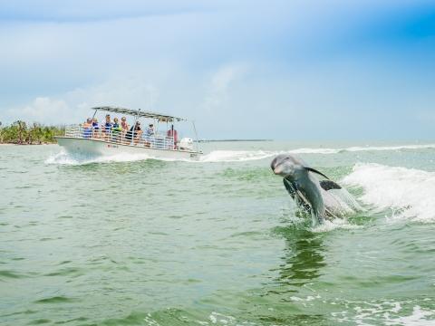 Dolphin Watch Ecotour, Ten Thousand Islands