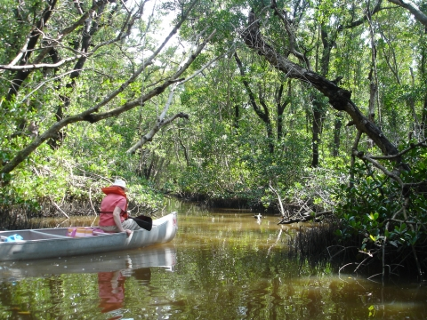 An Everglades Adventure
