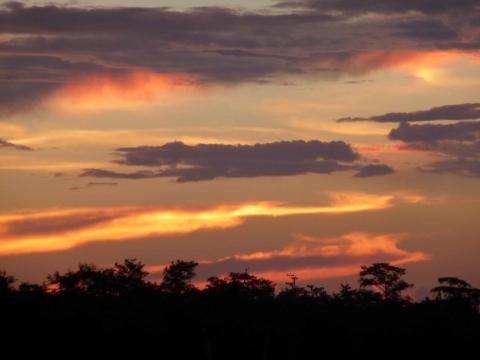Uma aventura em Everglades